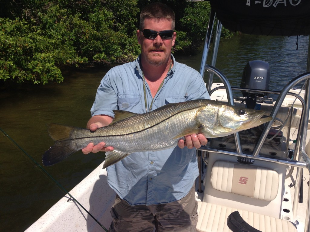 a large snook caught in dunedin florida